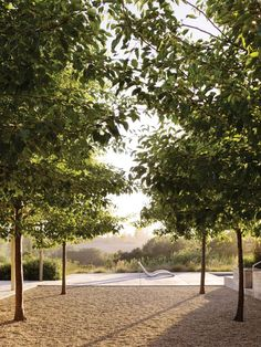A stand of precisely planted ornamental pear trees frames a view of the rolling landscape around Baker Lane, a Sonoma residence that's also home to an oil-producing olive orchard, vineyard, and organic garden.