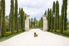{Eleanor (one of the property's two Shar Peis) at the entrance} Over the past two weeks we visited several cities in Italy and while each had its perks, our stay at the Borgo Santo Pietro in Tuscany was the highlight. When I asked for honeymoon recommendations here, this was the one suggestion that I simply couldn't get out of my head. It was meant to be the relaxing (and certainly the most indulgent) part of our trip and when we left, I actually felt homesick for the place. We read ...