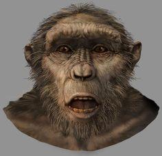 En el género pre-australopitecinos encontramos el Sahelanthropus tchadensis entre otros cuyos fósiles fueron hallados en el desierto del Djurab. El único espécimen se ha datado en 6 a 7 millones de años de antigüedad. Se cree que vivió en zonas pantanosas. Se han encontrado un cráneo, dos fragmentos de mandíbula inferior y tres dientes aislados. La inferida posición del cráneo con referencia al cuerpo sería un indicador de posición bípeda.