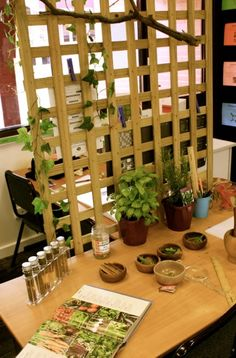 Botany/Sensory Table ≈≈ Early Life Foundations ≈≈ http://pinterest.com/kinderooacademy/provocations-inspiring-classrooms/