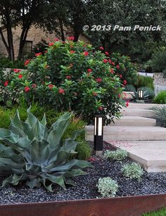Digging | Gardening wisely & beautifully in a hot climate. Austin Texas landscape. Flower garden with native plants