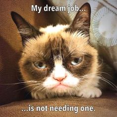- Career Counseling with Grumpy Cat. The post Career Counseling with Grumpy Cat. appeared first on Cat Gig. Career Counseling with Grumpy Cat. - Grumpy Cat - Ideas of Grumpy Cat Grumpy Cat Quotes, Funny Grumpy Cat Memes, Cat Jokes, Funny Animal Memes, Funny Animal Pictures, Funny Cats, Funny Animals, Funny Memes, Grumpy Kitty