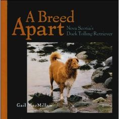A Breed Apart: Nova Scotia's Duck Tolling Retriever: Amazon.fr: Gail MacMillan