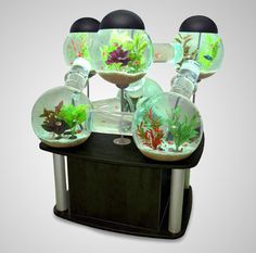 Labyrinth Aquarium. Fish can swim freely throughout the entire uniquely shaped aquarium.