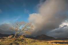 A lone wind-battered tree; Connemara, West Coast, Ireland, Landscapes, Scene, Clouds, Adventure, Mountains, Explore