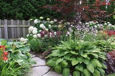 Beautiful companion plant: Annabelle Hydrangea.  Garden also features astilbes, hostas, daylilies, japanese maple, etc.