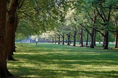 Green Park - Trees by Hachimaki, via Flickr