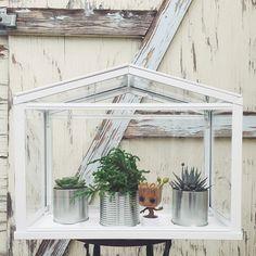 SOCKER greenhouse from IKEA Ikea Terrarium, Herb Garden, Diy And Crafts, Cactus, Herbs, Indoor, Wreaths, Container, Home Decor