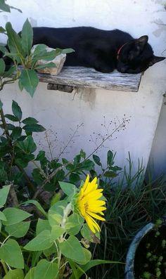 Black cat  ....