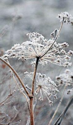 winter garden...