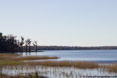 If you're looking for a park in Central Florida that offers a lot of activities, such as hiking, and is secluded, Lake Louisa State Park is a great option. Hillside Garden, Garden Villa, Central Florida, Central Park, Clermont Florida, State Parks, Hiking, Camping, Beach