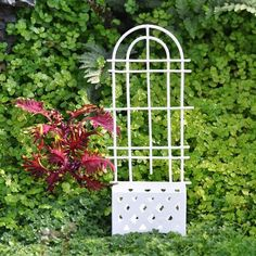 """Trellis Planter, White by Pots and Containers. $6.99. material: Metal; Color: White; size: 6"""" High. Turn a plain area of your mini-garden into a colorful wall of greenery with this trellis planter. Select from a variety of plants to create a focal point. The Red Stem Pilea will add color and texture as it gracefully grows up the trellis. The trellis planter comes in a white or antiqued finish. Note: Plants not included."""