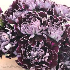 Burgundy flowers are so versatile in wedding bouquets! From moody roses to fun berries, find the perfect wine-colored wholesale flowers to fill your bouquet! Bride Flowers, Diy Wedding Flowers, Diy Flowers, Flower Ideas, Wedding Ideas, Flowers Pics, Wedding Bouquets, Wedding Inspiration, Flowers Today