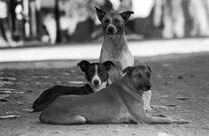 Perros callejeros. Adopta no compres.