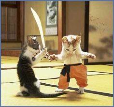 gatitos luchando!!!!!