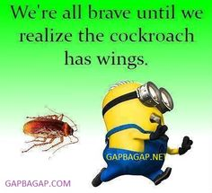 Funny Minion Meme About Cockroach