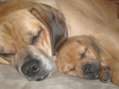 Mack and Desmond <3 Two puggles