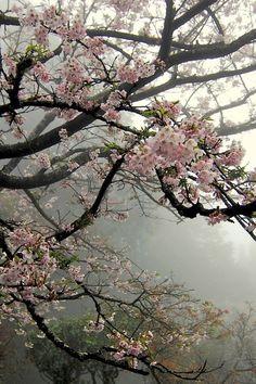 Florece entre la niebla.