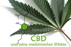 Cannabis - Arzneipflanze des Jahres 2018 - Rezeptoren - Gadgets and other nice products Cannabis, Endocannabinoid System, Plant Leaves, Plants, Benefits Of, Medicine, Household, Health, Flora