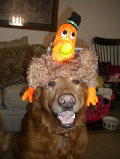 108 Best Thanksgiving Pet Pals Images Doggies Dogs Adorable Animals