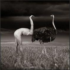 #human #ostrich #pleinair