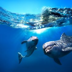 Dolphins are so lovely