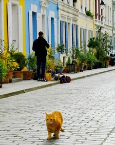 Going to Paris? Don't miss Rue Crémieux. It's the most picturesque street in Paris + there are lots of cats. Story and pictures at http://www.traveling-cats.com/2016/03/cats-from-paris-france.html