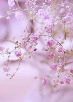 Pink flowers brighten your garden in all seasons, with various beautiful specimens from azaleas to pink roses. Flower Background Wallpaper, Flower Phone Wallpaper, Flower Backgrounds, Nature Wallpaper, Nature Plants, Flowers Nature, Pretty Flowers, Pink Flowers, Beautiful Flowers Wallpapers