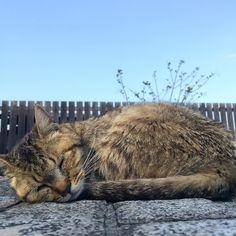 おはようございます昨日の尾道ねこああまた行きたいなあ #尾道ネコ歩き #尾道猫 by azukki