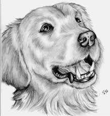Pencil drawings рисунки карандашные рисунки, карандаш и рисунки Animal Sketches, Animal Drawings, Dog Sketches, Cute Puppies Golden Retriever, Cute Puppy Breeds, Pencil Art Drawings, Animal Heads, Puppies For Sale, Christmas Art