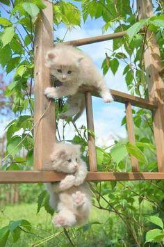 A imagem pode conter: gato e atividades ao ar livre