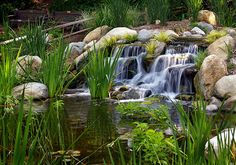 The Top 9 Benefits Of Backyard Ponds And Water Gardens~Ponds and water gardens have exploded in popularity as homeowners embrace the many benefits and advantages of having a backyard pond. Let's review the top 9 reasons more and more homeowners are choosing ponds and water gardens as the landscaping centerpiece for their backyard. Article And Videos