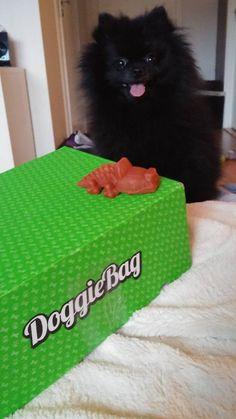 Cissé - DoggieBag.no #DoggieBag #Hund #Pomeranian #Dog