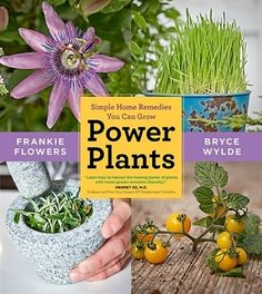 Power Plants: Simple Home Remedies You Can Grow by Frankie Flowers and Bryce Wylde.  Watch them on tv!  http://www.bttoronto.ca/videos/3365643422001/