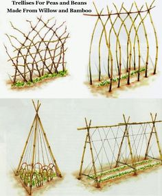 Living Willow and bamboo trellis for peas and beans.  The best time of year to prune willow trees is March. Click picture to learn more about willow coppicing.  Recommended by Seedy Sunday Eastbourne www.seedysundayeb.org