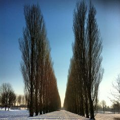 The Lane of 158 Poplars