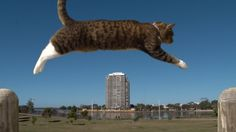 Didga the Athletic Cat Shows Off Her Incredible Parkour Skills and Takes the Extreme Sport to the Next Level