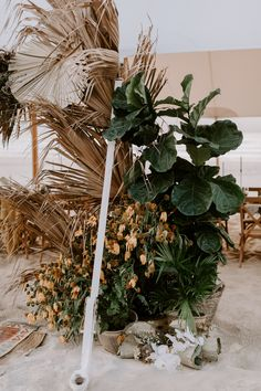 Dryed Plants combined with fresh green ones set a trendy statement at your wedding. Palm Wedding, Tipi Wedding, Indoor Wedding, Floral Wedding, Flower Backdrop, Ceremony Backdrop, Tropical Flower Arrangements, Tropical Flowers, Sage Green Wedding