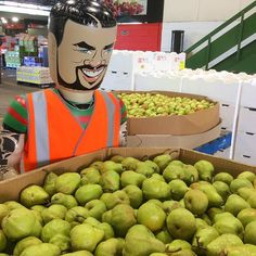 Who can resist a juicy pear? High in fibre flavoursome and a fabulous healthy snack.  @rendiggiti7 looks ready to dive into this years crop. #pears #healthyeating  #sinclairandantico #markets #rugbyleague # @erin_molan #sydney #wheresadam #nrl #rabbitohs @ssfcrabbitohs #fruit by sydneymarkets