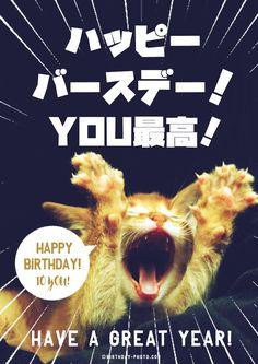 最高のお誕生日を表現した猫ちゃん Birthday Messages, Birthday Wishes, Birthday Cards, Happy Birthday Animals, Mr Cat, Birthday Photos, I Love Cats, Cute Animals, Funny