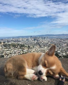 Twin Peaks San Francisco corgi