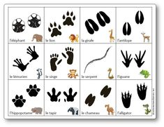 50 Ideas Endangered Animal Art For Kids Jungle Animals, Animals For Kids, Yoga For Kids, Art For Kids, Zoo Activities, Animal Footprints, Animals Information, Fun Facts About Animals, Animal Tracks