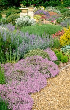 The gravel border features mostly Mediterranean-style ground-cover plants, including thyme, and catmint (Nepeta).