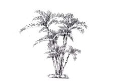 点击查看源网页 Plant Sketches, Planting Shrubs, Grass, Plants, Home Decor, Decoration Home, Room Decor, Planters, Grasses