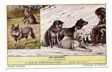 DOG Malamute or Husky SLed Dogs & Wolf, 1960s Advertising Trade Trading Card