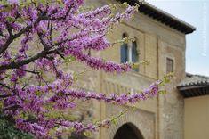 Puerta del Vino en primavera, Alhambra Granada
