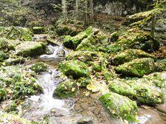 wandern-herbst-schweiz-twannbachschlucht biel Golf Courses, Plants, Travelling, Switzerland Destinations, Hiking Trails, Road Trip Destinations, Travel Inspiration, Hiking, Nature