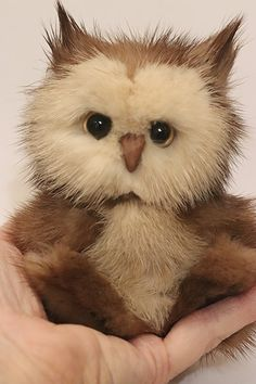This is the cutest little Owl.Measuring inches in height. Filled with steel shot.Feels so real in your hand.OOAKOne Of A Kind.Hope you like it. Panda Bear, Polar Bear, Teddy Bear, Orangutan, Chipmunks, Otters, Guinea Pigs, Sloth, Mammals