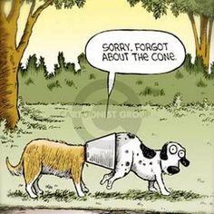 E-collar humor! Love it! Thanks, Three Dog Bakery Headquarters