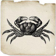 Crab Crustacean Burlap Digital image